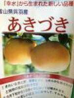 あきずき梨7玉