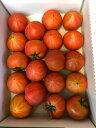 フルーツトマトぐんま産糖度11度以上ブリックスナイン小