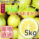 【産地直送】広島 大長産 レモン 5kg 冷蔵配送【広島産レモン】【国産レモン】【なかだい農園】