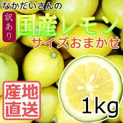 【産地直送】広島大長産レモン1kg冷蔵配送【広島産レモン】【国産レモン】【なかだい農園】