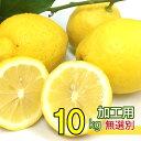 送料無料 国産 広島県 大長産 レモン 約10kg サイズいろいろ 加工用 ノーワックス 防腐剤不使用 うえがみ農園直送 上…