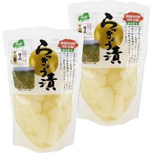 鳥取砂丘産 らっきょう漬 130g 2袋セット 送料無料 センナリ 米酢 鳥取県