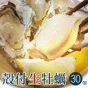 送料無料 産地直送 広島県産 殻付き 生牡蠣 30個 アミスイ かき小町 かき カキ 牡蛎 焼き牡蠣 かき鍋 カキフライ