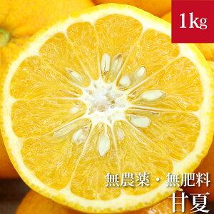 甘夏 1kg 自然栽培(無農薬・無肥料 ) 広島県産あまなつ アマナツ