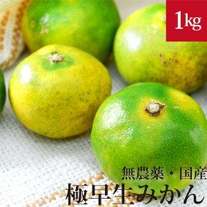 極早生みかん 1kg 自然栽培(無農薬・無肥料)・熊本県産
