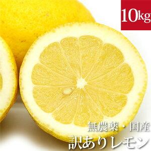 クーポン利用で¥1,000OFF!【訳あり】国産レモン10kg 無農薬・無化学肥料 神奈川県小田原産