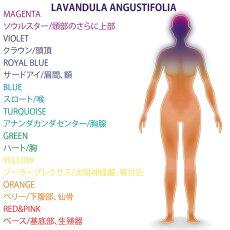 エッセンシャルオイルラベンダー・アングスティフォリア5ml