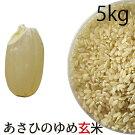 無農薬玄米