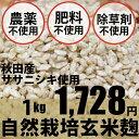 自然栽培玄米麹 1kg マルカワみそ★味噌や甘酒には無農薬・無肥料の生麹★