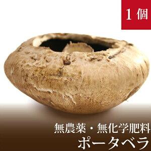 ポータベラ ジャンボマッシュルーム 1個 直径約12cm 国産 無農薬・無化学肥料