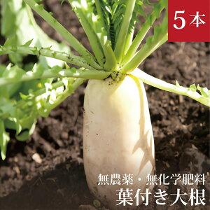 葉付大根5本無農薬・無化学肥料・千葉県産