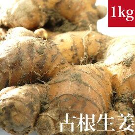 土付き(泥付き)古根生姜 1kg 国産 無農薬・無化学肥料