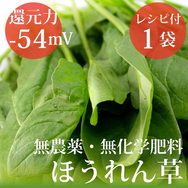 ほうれん草 200g×1袋 ヴィーガンレシピ付 無農薬・無化学肥料・千葉県産還元力(抗酸化力)−54mV