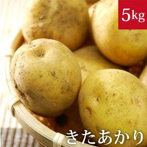 キタアカリ5kg じゃがいも無農薬・無化学肥料 千葉県産 国産