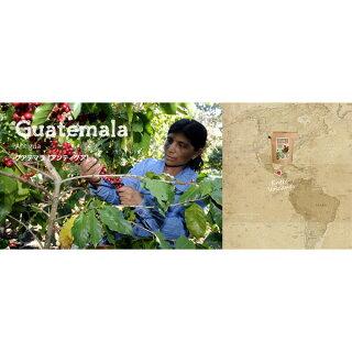 グローワーズカップCOFFEEBREWERグアテマラGUATEMALA(20g)