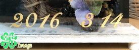 ウェルカムボード用数字シール(金色の数字・筆記体)0〜9とドット.各2ピース(1シート)【結婚式 花嫁DIY ウェディング ゴールド 記念日 日付】【あす楽】
