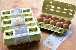 ひよころ鶏園の若鶏が産んだ『初産みたまご』おまかせ40個セット〈※未洗卵・孵化用での発送は楽天市場店では対応しておりません〉
