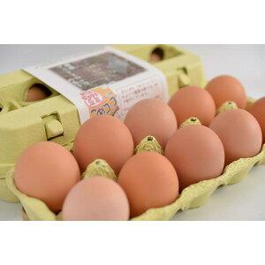 岡崎おうはんの平飼い有精卵10個入【横斑プリマスロック】〈※未洗卵・孵化用での発送は楽天市場店では対応しておりません〉