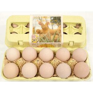 純系名古屋コーチンの平飼い有精卵10個入〈※未洗卵・孵化用での発送は楽天市場店では対応しておりません〉
