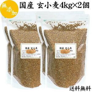 国産 玄小麦 4kg(2kg×2袋)×2個 送料無料 小麦粒 雑穀 ビタミン B1 B6 B12 B群 フスマ 胚乳 胚芽 未精製 チャック付き袋 送料込み 自然健康社 【コンビニ受取対象商品】