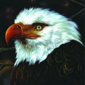 【送料無料】 Mogwai モグワイ / Hawk Is Howling 輸入盤 【CD】