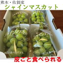 シャインマスカット 果物 お中元 お盆 お彼岸 お供え 期間限定 数量限定 産地直送 甘い 人気商品 フルーツギフト 果物…