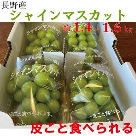シャインマスカット 果物 期間限定 数量限定 産地直送 甘い 人気商品 フルーツギフト 果物ギフト 約1.4キロ〜1.6キロ入 クール便 【送料無料】
