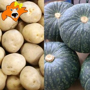 野菜セット かぼちゃ 10kg 送料無料 キタアカリ 10kg(計20kg) 価格7350円 北海道産 きたあかり 北あかり カボチャ 南瓜 詰め合わせ