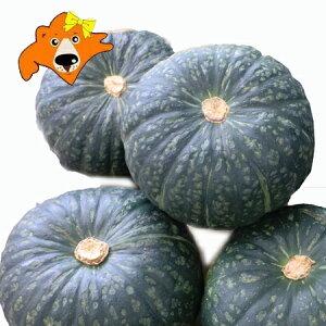 野菜 かぼちゃ 送料無料 北海道産 カボチャ 1箱 10kg詰 (5玉から7玉入) 価格3980円 南瓜は収穫時期により、えびす・九十九里・くりゆたか・くりしょうぐんのいずれか