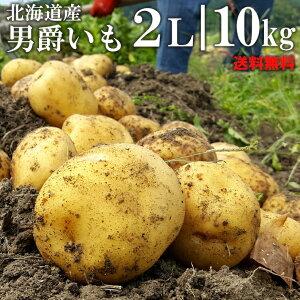 今季出荷開始中!越冬じゃがいも 送料無料 北海道産 男爵いも10kg(2Lサイズ)【10kg 10kg 10キロ 男爵芋 だんしゃく 男爵 いも イモ 薯 ジャガイモ 北海道 野菜 秋野菜 産地直送 男爵いも 男爵イ