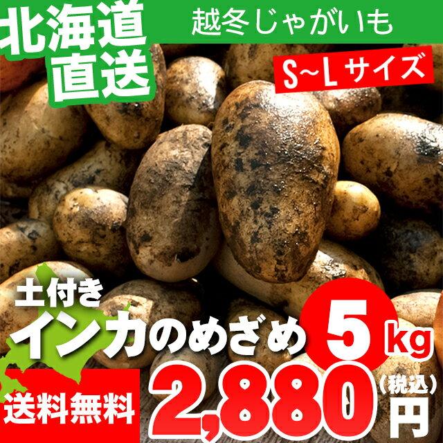 ギフト 贈り物越冬じゃがいも 送料無料 じゃがいも インカのめざめ(S〜L混合サイズ:5kg)【インカの目覚め 5kg 産地直送 いも イモ 薯 越冬じゃが ジャガイモ じゃがいも 北海道産】