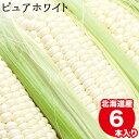 【出荷開始中】とうもろこし 北海道 送料無料 北海道産 白いとうもろこし ピュアホワイト(6本) 南幌町明るい農村ネッ…