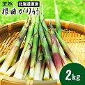 【2017年度出荷★早期予約】幻の山菜【送料無料】北海道産天然竹の子2.0kg入り