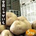 北海道産雪蔵じゃがいも(とうや・男爵・キタアカリ・メークイン)Lサイズ5kg【着日指定可5kg産地直送越冬じゃがいも北海道産だんしゃくきたあかりジャガイモ】