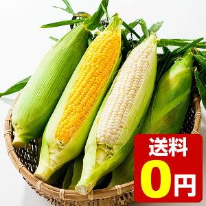 笹崎さんちのとうもろこし 恵味ゴールド&ピュアホワイトミックス 1箱 20本入り 各10本 約10.4kg ☆8月中旬より収穫次第、順次発送予定