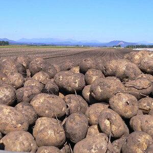 北海道芽室町尾藤農産 尾藤さんちのじゃがいも 北あかり5kg MLサイズ 1個約50g〜250g 同梱不可 ギフト対応不可 産地直送