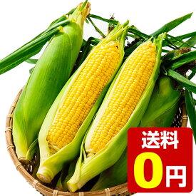 笹崎さんちのとうもろこし 恵味ゴールド 1箱 10本入り 約5.5kg ☆まもなく終了!9月22日(火)まで