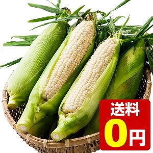 笹崎さんちのとうもろこし ピュアホワイト 1箱 10本入り 約5kg ☆8月中旬より収穫次第、順次発送予定