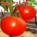 北海道産フルーツトマト!【旬ギフト】 【送料無料】 人気のフルーツトマト 贈り物にもお取り寄せにもオススメフルー…