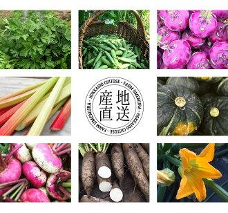 【千歳市ファームウメムラ】季節のおまかせ野菜便