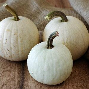 ポイント10倍!ハロウィンかぼちゃホワイト【S】北海道ファームウメムラ産 おもちゃかぼちゃ Halloween ディスプレイ ハロウィン ハロウィン飾り