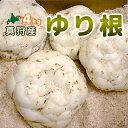 【2020年収穫ユリ根4kg】北海道真狩産「ゆり根」2kg×2箱 計4kg[百合根/ユリ根/ゆりね/ユリネ]