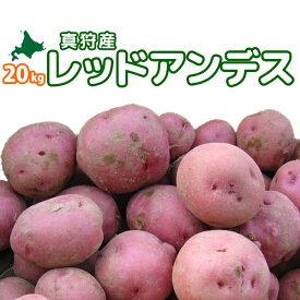 [2020年秋収穫 レッドアンデス 20kg] 北海道真狩産じゃがいも「レッドアンデス」 ジャガイモ【どさんこ問屋】