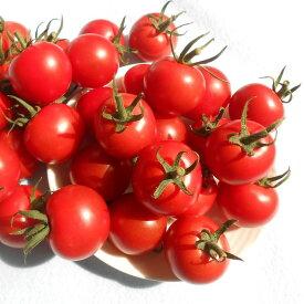 【8月頃から発送】芳醇な香りが魅力のほれまるトマト2kg北海道産【送料無料】