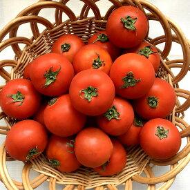 【6月中旬から発送】たかださん家のぜいたくトマト(約15~25玉)北海道比布産贅沢トマト糖度10.3%