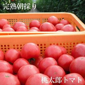 【8月末から発送】有機質肥料栽培完熟朝採り桃太郎トマト4kg【送料無料】