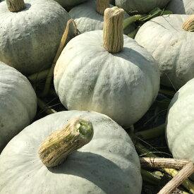 【販売中】北海道剣淵町産雪化粧かぼちゃ10kgホクホクした優しい味【送料無料】