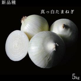 【予約中】新品種北海道産真っ白な玉ねぎ5kg【送料無料】