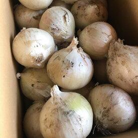 【9月中旬から発送】訳あり北海道産真っ白な玉ねぎ5kg【送料無料】
