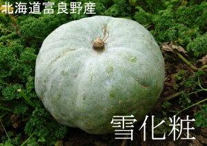 富良野産白いカボチャ「雪化粧」10kg(4〜6玉)送料無料)かぼちゃ/南瓜/ゆきげしょう/パンプキン/かぼちゃ北海道/ハロウィン